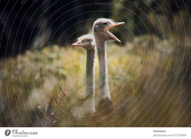 Achtung, Achtung! Natur Ferien & Urlaub & Reisen Sommer Tier Ferne Umwelt Wiese Freiheit Tourismus Wildtier Sträucher Ausflug Wachsamkeit Sommerurlaub exotisch