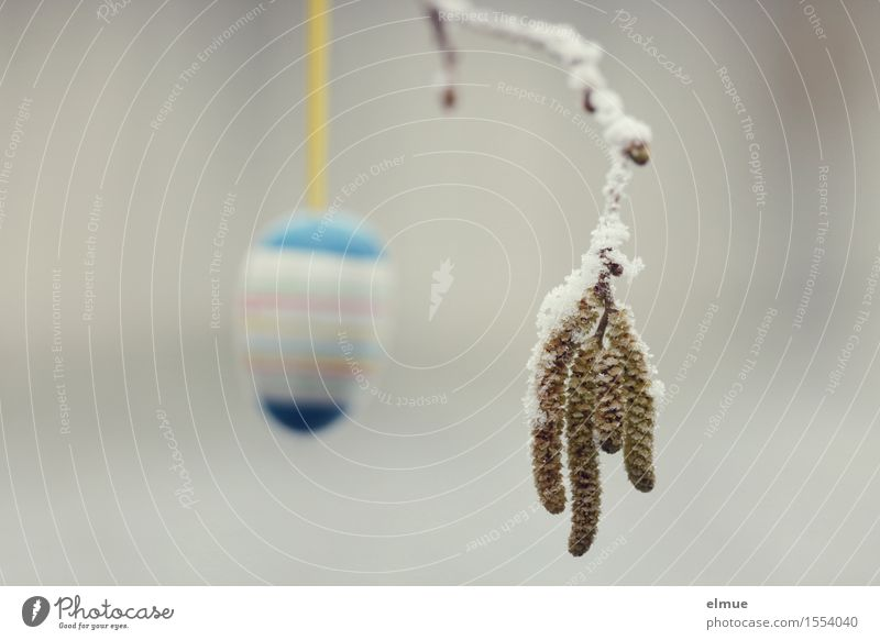 Osterei hintergründig Ostern Frühling Zweige u. Äste Haselnuss Haselnusskätzchen Katzenbaby Ei Eis hängen einzigartig kalt Erotik Klischee Stadt mehrfarbig