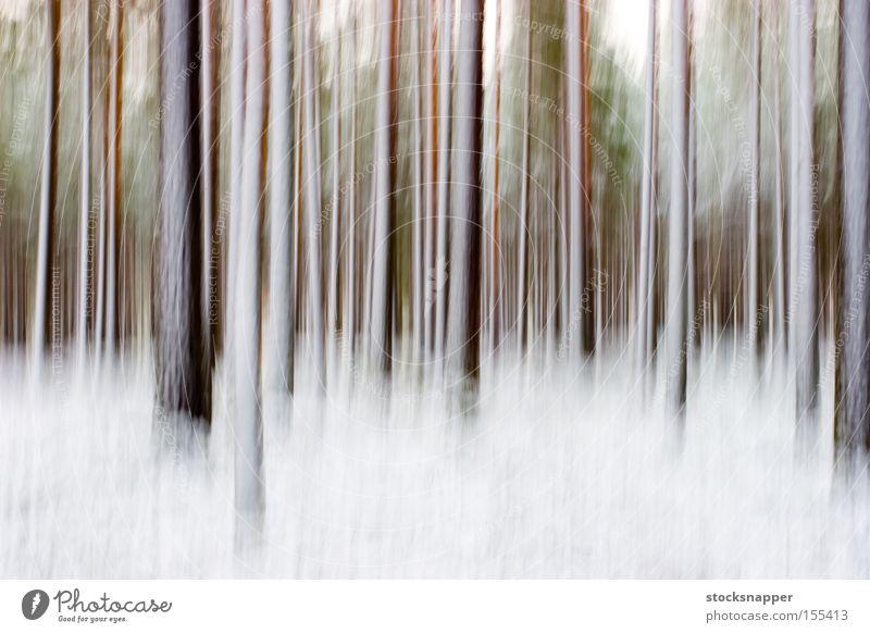 Abstrakter Winterwald künstlerisch kunstvoll Kiefer Baum Kiefern abstrakt Schnee Wald verschwommen Unschärfe