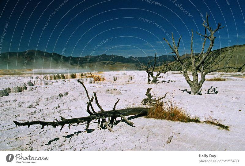 Dead Trees Land weiß Baum Tod Traurigkeit Trauer USA Wüste Blauer Himmel Montana Kalk Heisse Quellen Wyoming Yellowstone Nationalpark