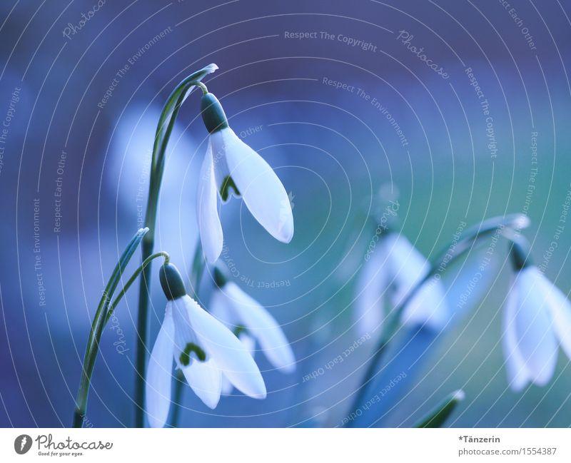 Frühling! Natur Pflanze Schönes Wetter Baum Schneeglöckchen sportlich Freundlichkeit Fröhlichkeit frisch natürlich schön blau weiß Farbfoto mehrfarbig