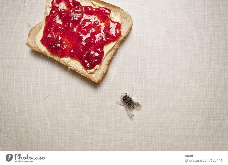 Mahlzeit Lebensmittel Fliege Ernährung Tisch Dekoration & Verzierung süß Kreativität Küche Idee Kunststoff Insekt Frühstück lecker Brot Bioprodukte