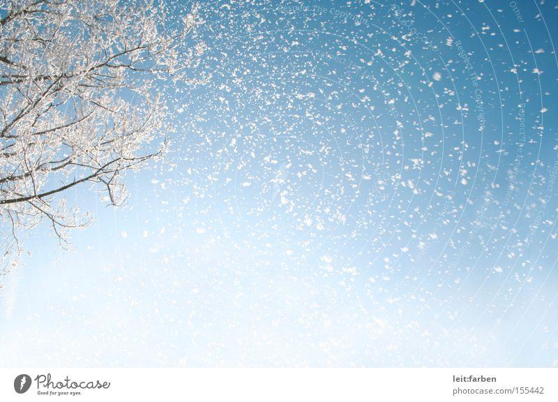 Schneegestöber Schneefall Winter kalt Dezember Januar rieseln Baum Ast Himmel Froschperspektive Schneesturm blau weiß