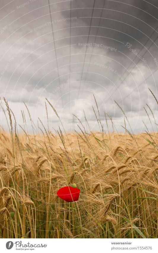 survivor Natur Sommer Landschaft Einsamkeit Wolken Umwelt Religion & Glaube Feld Energiewirtschaft Wachstum Kraft Erfolg einzigartig Hoffnung Mohn