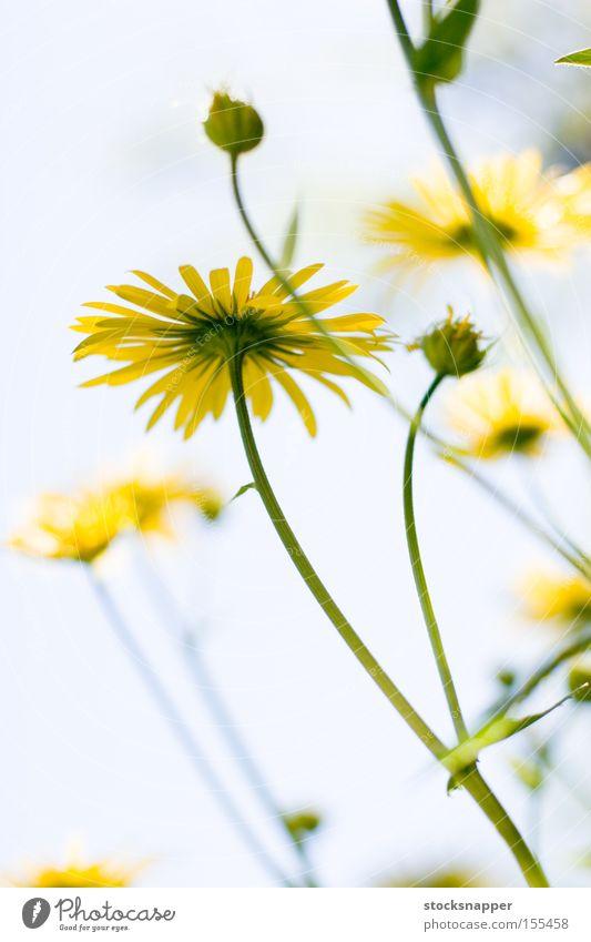 Natur Himmel Blume gelb unten