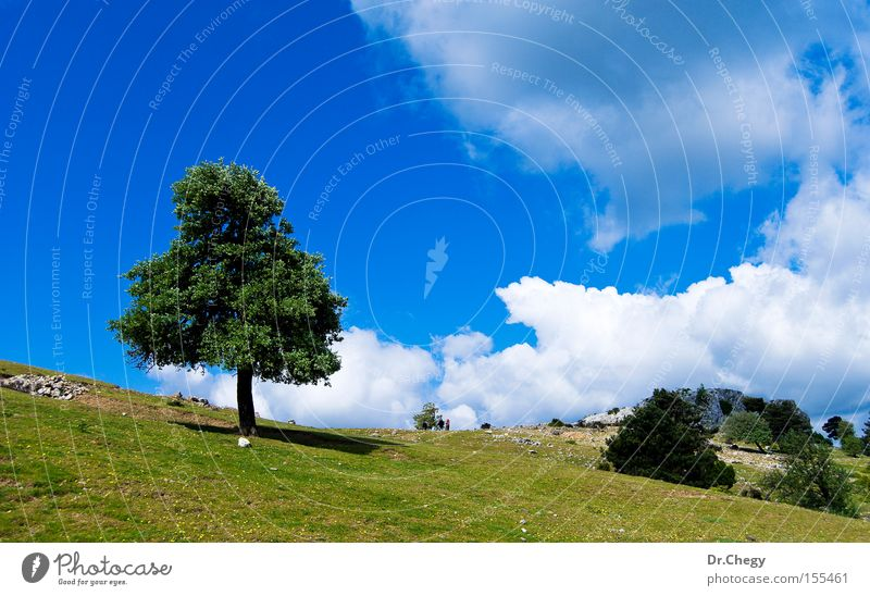 Einsamer Baum Wolken blau grün ländlich Gras weiß Stein Berge u. Gebirge Hügel Einsamkeit Himmel Frühling