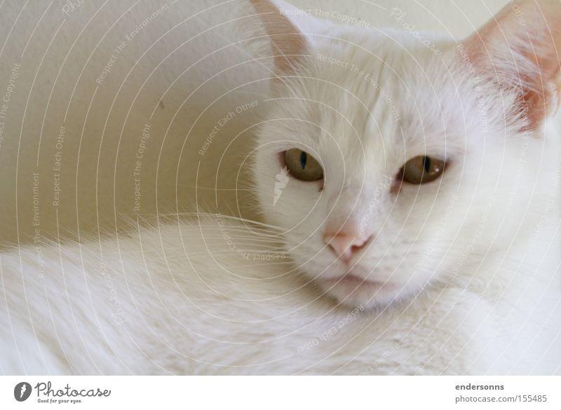 Tier Design Katze fällen Katzenauge Katzenfreund