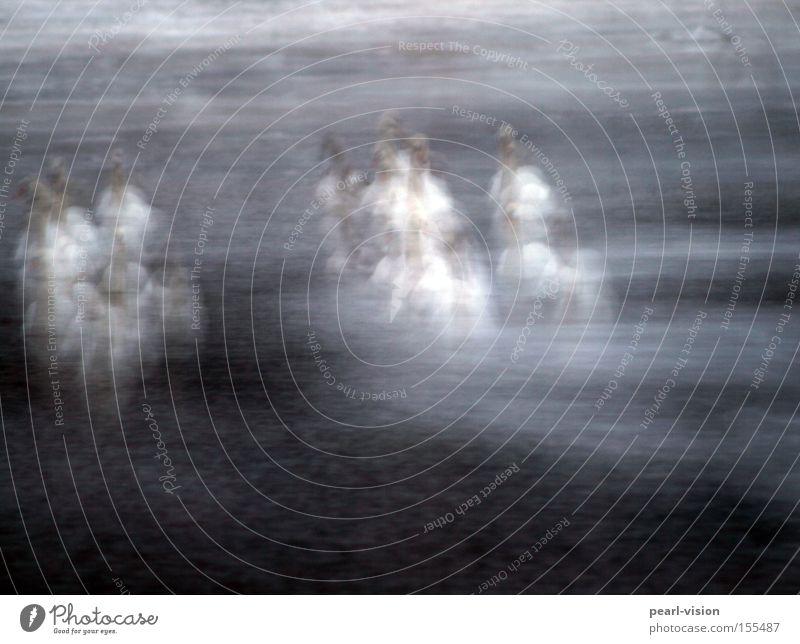 Zitterparty Wasser kalt Menschengruppe Eis Vogel frieren Zusammenhalt Gans Schwan