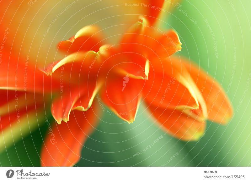 Frühlingsfrische Pflanze schön grün Sommer Blume gelb Leben Frühling Blüte außergewöhnlich hell orange elegant frisch Fröhlichkeit ästhetisch