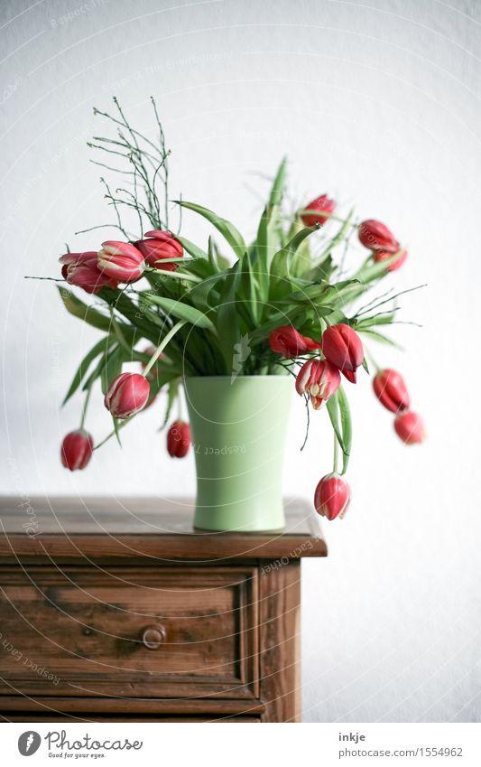 Tulpen schön grün weiß rot Frühling Lifestyle Wohnung Häusliches Leben Wachstum frisch Dekoration & Verzierung Blühend Blumenstrauß hängen antik