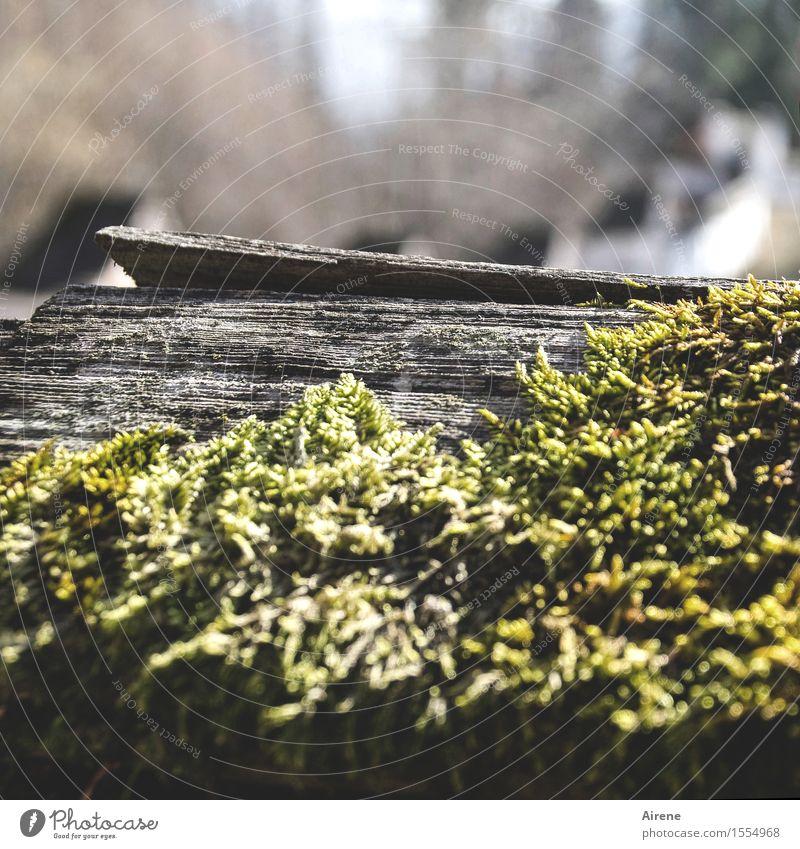 Jetzt wächst wieder alles zu! Natur alt grün Umwelt Senior Holz grau Zeit Wetter Wachstum Klima einfach Vergänglichkeit weich nachhaltig Moos