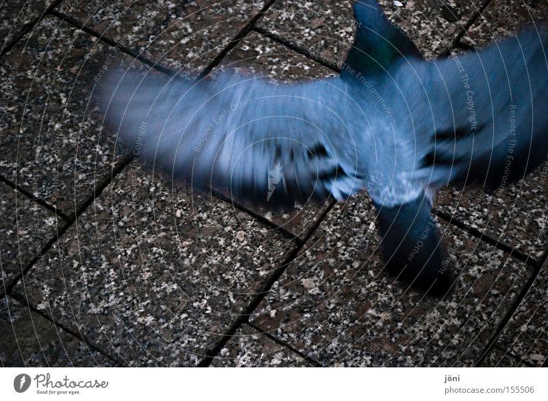Ratten der Lüfte (2) Stadt Tier Bewegung Vogel Frieden Feder Flügel Verkehrswege Taube frech Schwung Plage Fußgängerzone