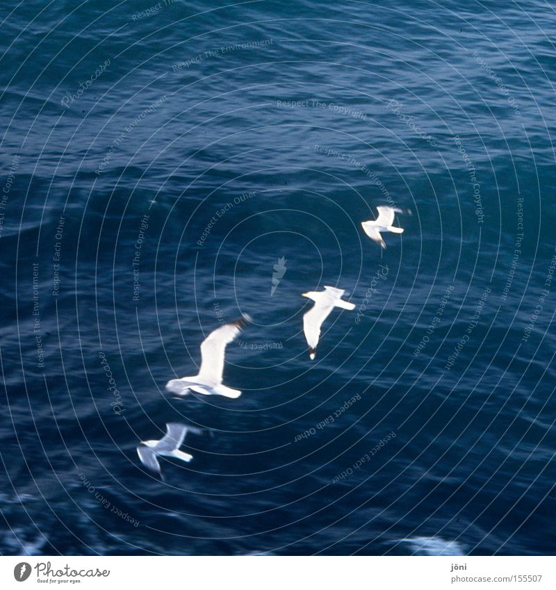 Formationsmöven Wasser Meer Strand Ferien & Urlaub & Reisen Erholung Bewegung Linie Wasserfahrzeug Vogel Wellen Küste fliegen Segeln Bootsfahrt