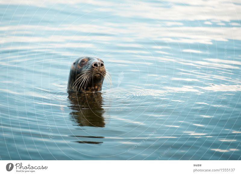 Watt? Natur blau Wasser Meer Tier lustig außergewöhnlich Kopf wild Wellen Wildtier authentisch beobachten niedlich Neugier Im Wasser treiben