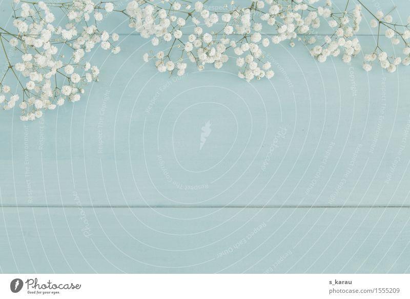 Frühlingshintergund Feste & Feiern Muttertag Ostern Hochzeit Geburtstag Taufe Blume Holz Freundlichkeit Fröhlichkeit positiv blau türkis weiß Frühlingsgefühle