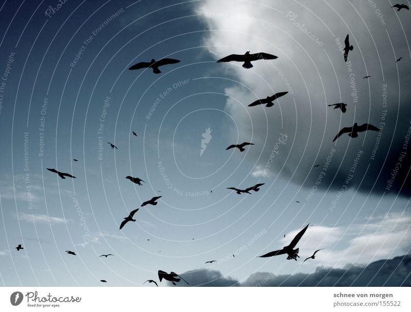 fliegerei Vogel Himmel Wolken Luft Wetter Möwe See Meer Gewitter Regen blau weiß
