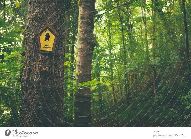 Uhuuu Erholung ruhig Sommer Landwirtschaft Forstwirtschaft Umwelt Natur Pflanze Klima Baum Blatt Wald Schilder & Markierungen Wachstum nachhaltig natürlich gelb