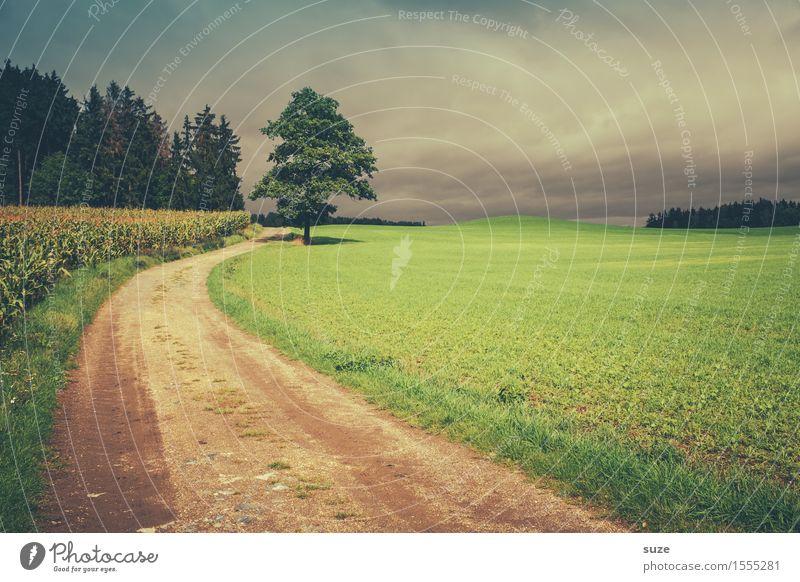 Fußmarsch Himmel Natur grün Baum Landschaft Einsamkeit Wald Umwelt kalt Wege & Pfade Herbst Wiese Wetter Feld Freizeit & Hobby Wachstum