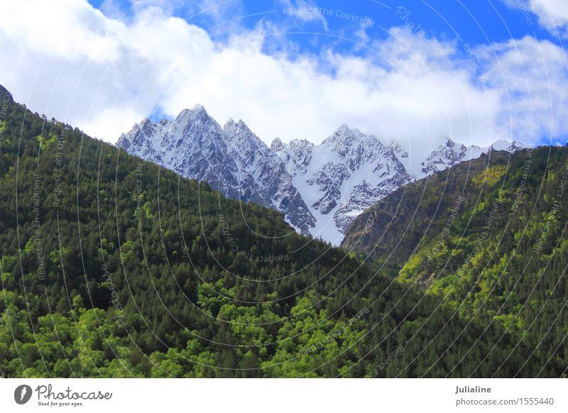 Landschaft mit Kaukasus Schnee Berge u. Gebirge Natur Baum Blatt Wald Hügel Felsen Gipfel Gletscher Stein wild grün weiß Dombai Altimeter Klippe Europa Höhe Eis