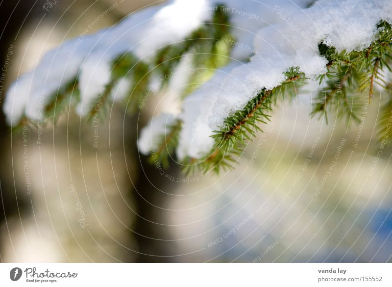 Bedeckt Natur Baum Winter kalt Schnee Eis Weihnachtsbaum Tanne Pflanze Dezember Januar Weihnachtsdekoration