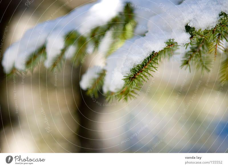 Bedeckt Schnee Tanne Weihnachtsbaum Baum Natur Detailaufnahme Winter kalt Dezember Januar Eis