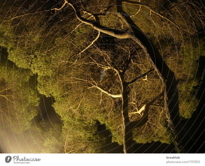 Pflanzen wünschen sich das Licht Baum grün dunkel Ast Sommernacht