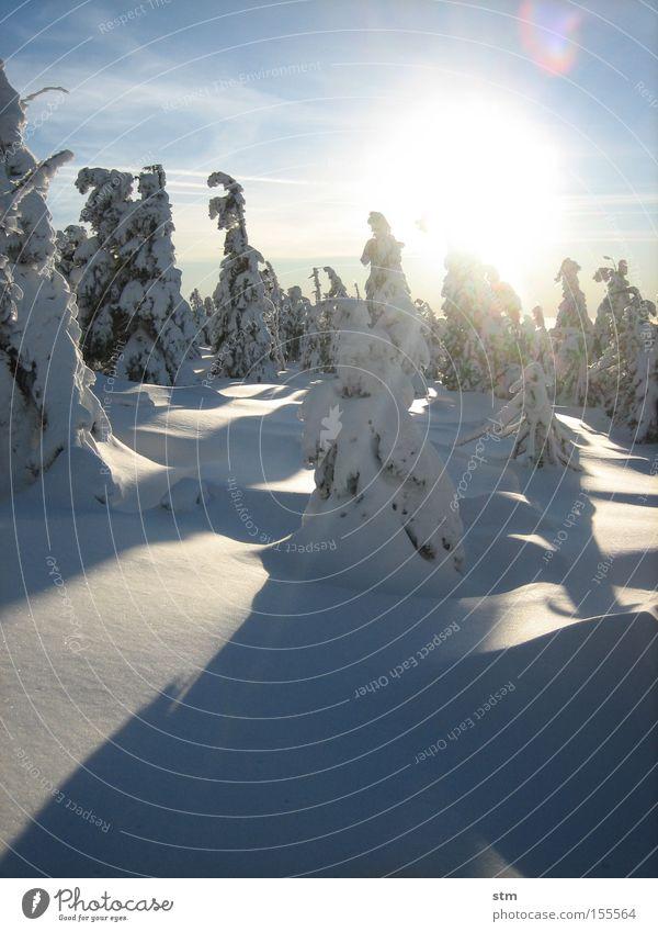 märchenwald 2 Sonne Winter Schnee Berge u. Gebirge Natur Landschaft Schönes Wetter Eis Frost Baum Tanne Fichte Wald Gipfel Schneebedeckte Gipfel kalt ästhetisch