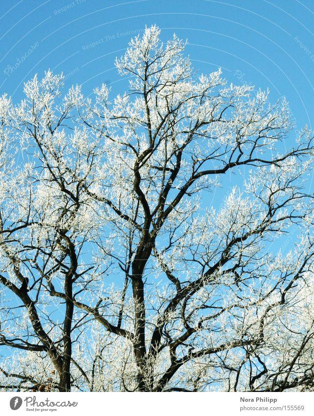 für Bèla Ausflug Winter Schnee Umwelt Natur Himmel Klima Schönes Wetter Eis Frost Pflanze Baum Park ästhetisch kalt blau Hoffnung Sehnsucht Raureif Ast Klirren