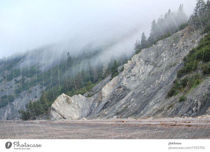 Geisterstrand Umwelt Natur Landschaft Urelemente Wasser Himmel Klima Schönes Wetter schlechtes Wetter Unwetter Nebel Pflanze Baum Felsen Berge u. Gebirge