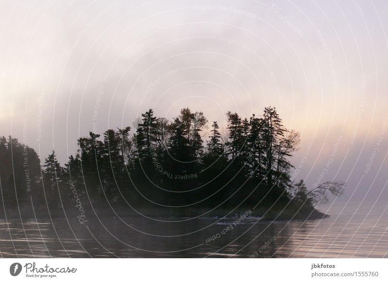 Morgennebelromantik Umwelt Natur Landschaft Urelemente Wasser Himmel Sonnenaufgang Sonnenuntergang Frühling Klima Schönes Wetter Nebel Pflanze Baum Meer