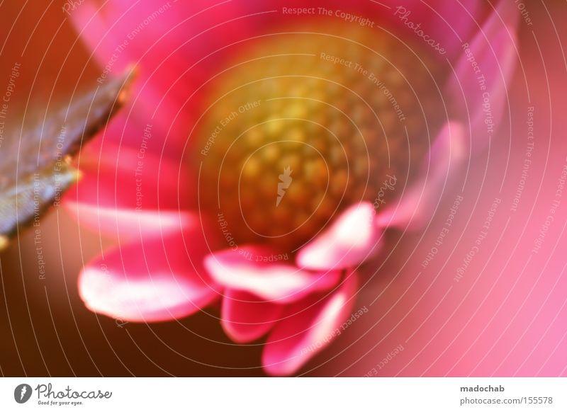 Pink Flower Natur schön Blume Pflanze rosa Hoffnung ästhetisch zart sanft Anmut Blumenhändler Muttertag