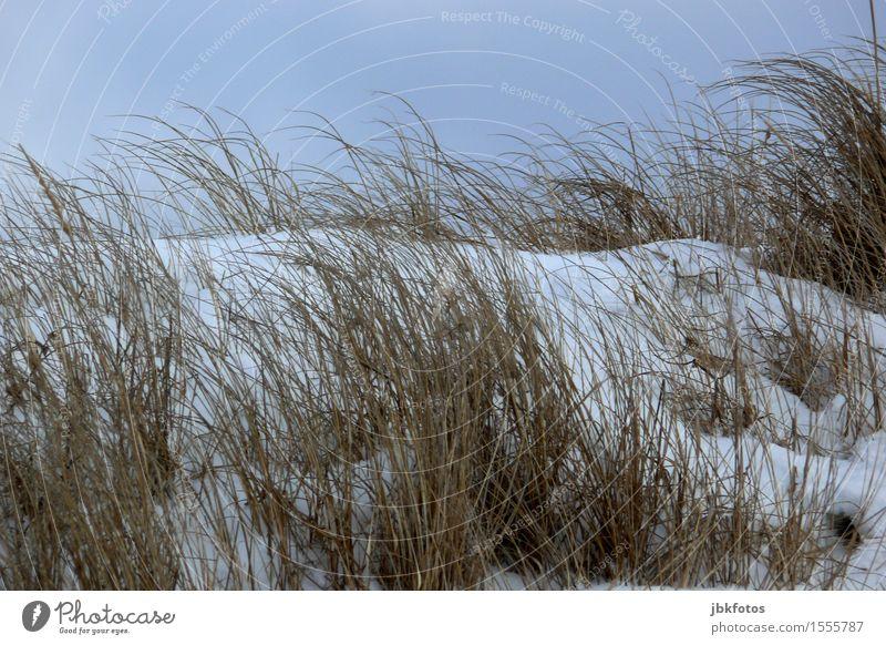 Strandtag Umwelt Natur Landschaft Sand Himmel Wolkenloser Himmel Sonne Winter Schönes Wetter Eis Frost Schnee Pflanze Gras Sträucher Küste Ostsee kalt