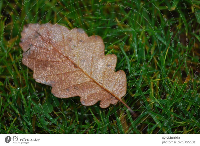 autumn II Wasser Wassertropfen Herbst Regen Gras Blatt Wiese nass braun grün Einsamkeit Vergänglichkeit Jahreszeiten Eiche Tropfen Farbfoto mehrfarbig