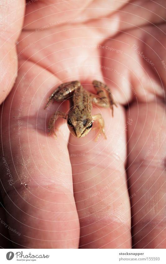 Hand Tier klein sitzen Froschlurche