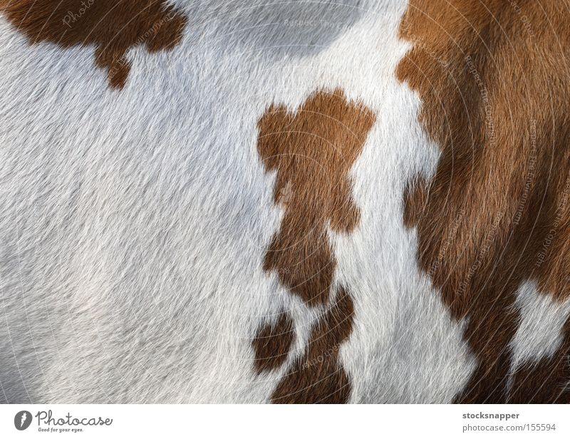 Kuh Säugetier Tier weiß braun Seite Haut pelzig Textur Hintergrundbild