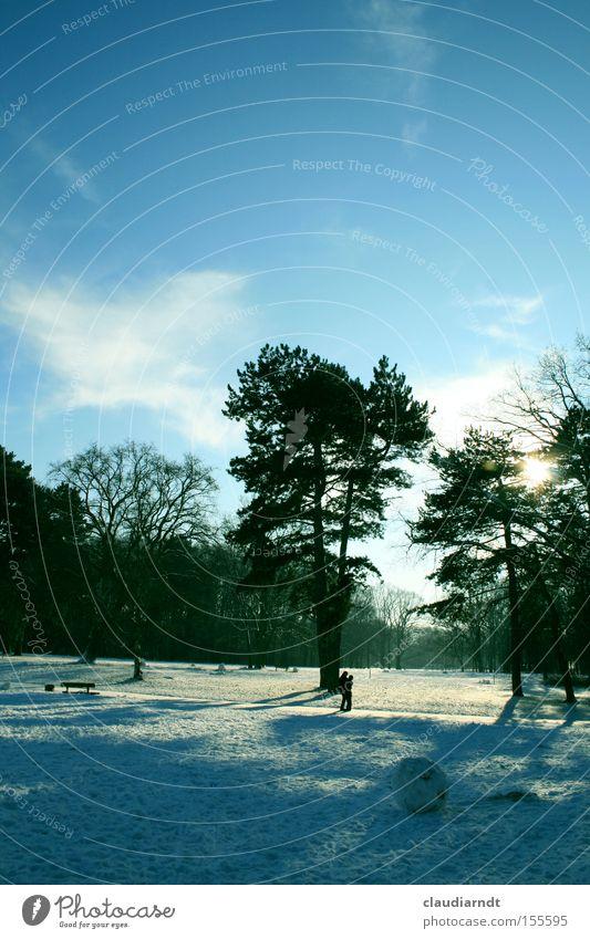 Wintertag Schnee Park Landschaft Baum kalt Frost Schönes Wetter Spaziergang Schneebälle ruhig Schatten