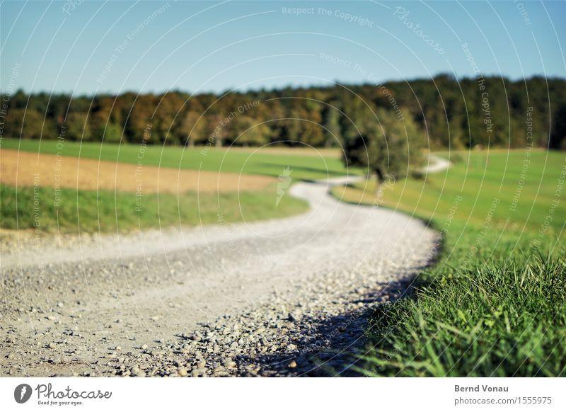 S` Umwelt Natur Landschaft Sonne Sommer Baum Gras Feld Hügel blau grau grün Kurve Kies Boden nah schön Spaziergang Idylle Umweg fahren Autofahren Landwirtschaft