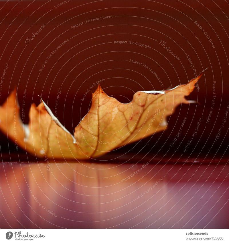 carefully rot Blatt gelb Herbst zerbrechlich filigran