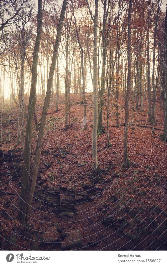 Margarethe Umwelt Natur Landschaft Pflanze Baum Felsen Berge u. Gebirge Schlucht Gefühle leuchten steil hoch tief Blatt herb Herbst margarethenschlucht