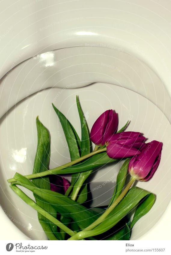 Ich ess Blumen... Natur Frühling Kot Toilette Duft Tulpe pflanzlich Knollengewächse