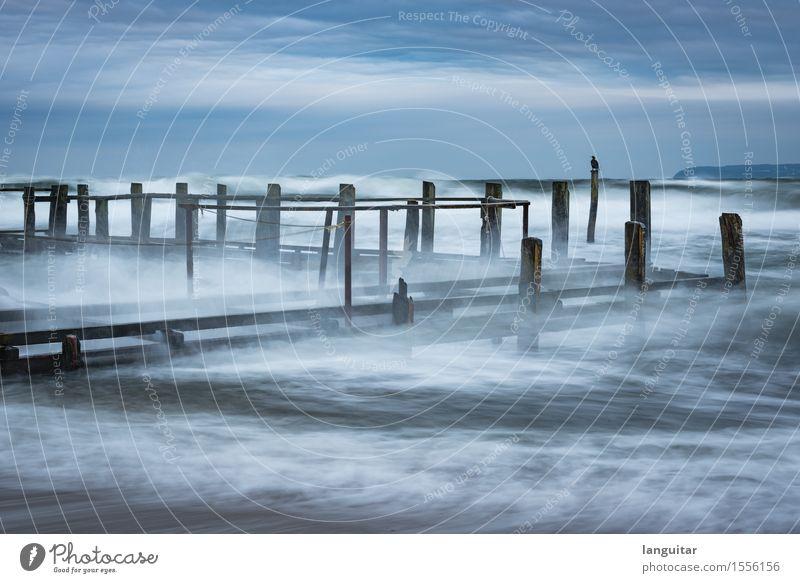 Storm Chasing blau Wasser Meer Landschaft Wolken Küste Deutschland Vogel Wellen Wind Ostsee Bucht verfallen Unwetter Sturm Steg