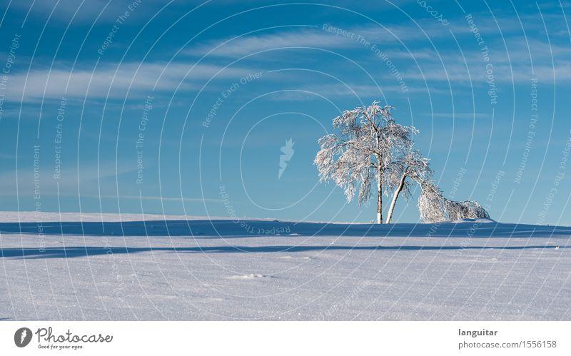 Too much snow Winter Schnee Winterurlaub Landschaft Baum kalt blau weiß Deutschland Kahler Asten Winterberg Isoliert (Position) Birke Himmel Schatten