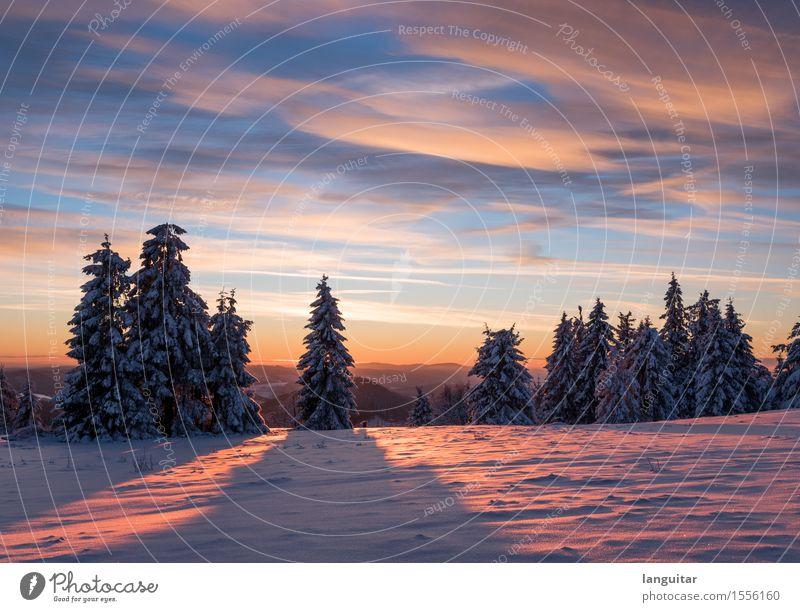 Split Sunset Winter Schnee Winterurlaub Berge u. Gebirge Natur Landschaft Himmel Wolken Sonne Sonnenaufgang Sonnenuntergang Sonnenlicht Baum Wald Gipfel