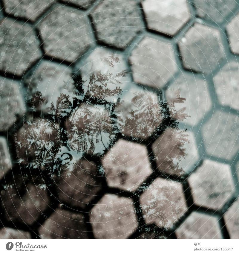 Sinister Square of Childhood Winter Angst Quadrat durchsichtig Erinnerung Panik unheimlich Bienenstock Psychische Störung