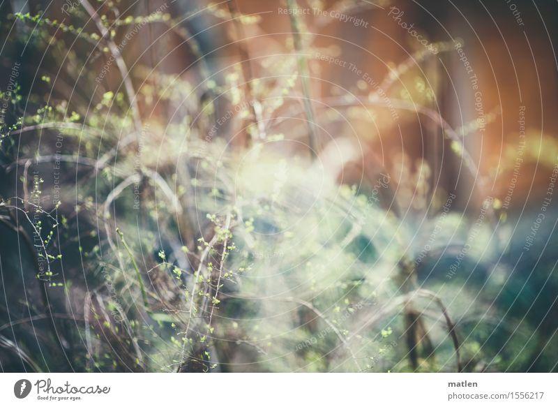 Frühlingsgefühl Natur Pflanze blau grün weiß Wald gelb grau braun Park wild Sträucher Ast Zweig durcheinander