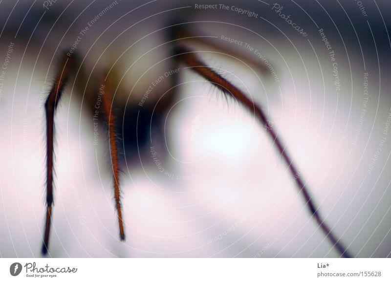 Phobische Störung Jagd Spinne 1 Tier krabbeln bedrohlich Ekel hässlich Angst Schrecken schemenhaft schleichen Panik gruselig Intuition Nahaufnahme Makroaufnahme