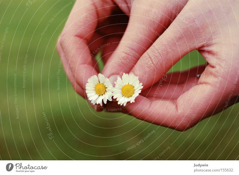 2 Gänse Frau Natur Hand grün Sommer Blume gelb Wiese Gefühle Zusammensein rosa paarweise Gesellschaft (Soziologie) Gänseblümchen