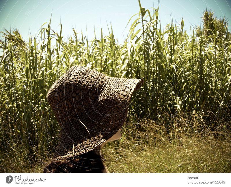 Sommer! Sonne ruhig Wärme Spaziergang Hut Landwirtschaft Amerika Feld ländlich Mais Getreide Landleben Sonnenhut Maisfeld