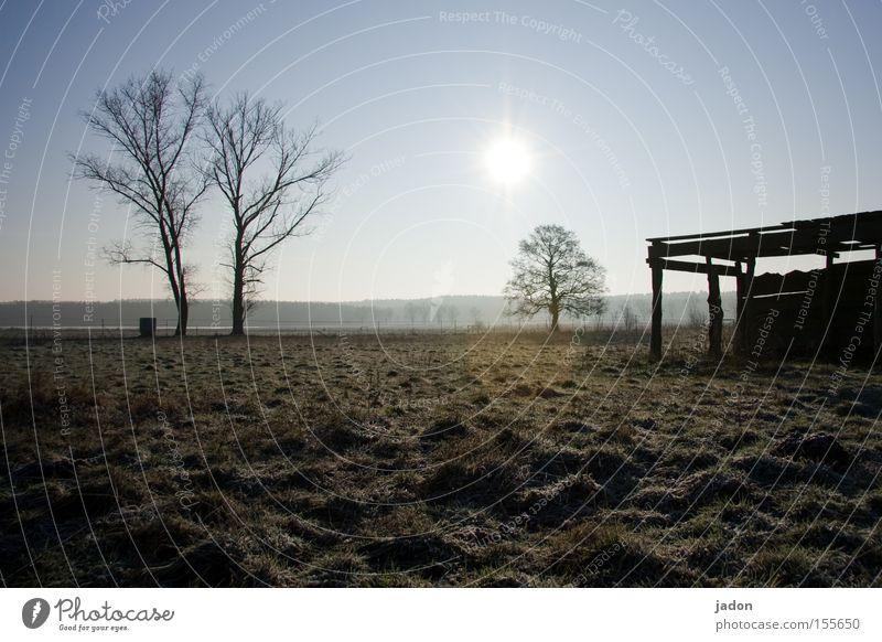 Wiesn Wiese Weide Baum Hütte Stall Sonne Gegenlicht Brandenburg Winter Abenddämmerung verfallen Feld Vergänglichkeit Bonanza Landwirtschaft