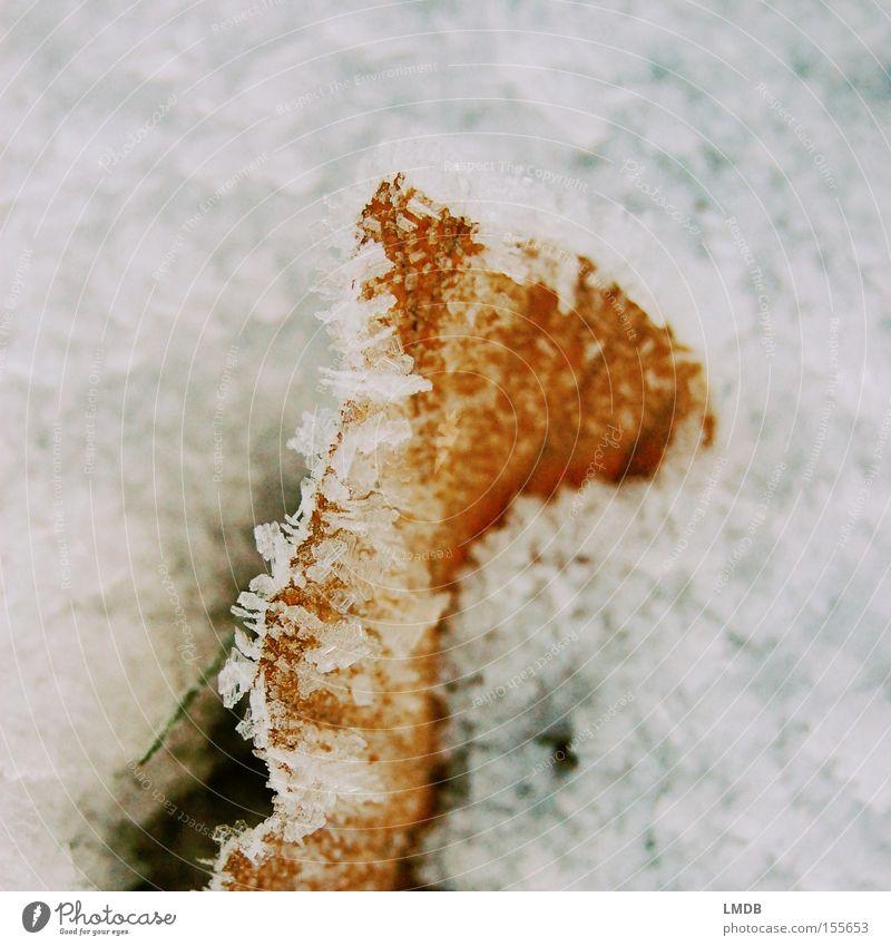 Eingefroren Eiskristall Blatt eingeschlossen gefangen Frost kalt Winter rot weiß Buche eingefrohren Schnee